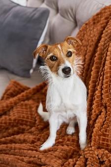 Trieste hond die thuis op de bank zit en naar de camera kijkt