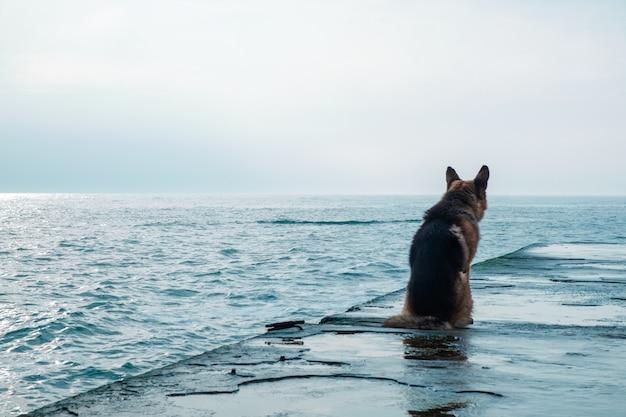 Trieste hond zit bij de zee en kijk weg