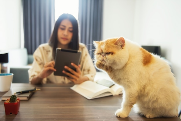 Trieste kat negeren door vrouwelijke eigenaar