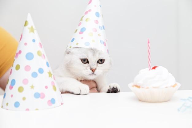 Trieste witte kat in een feestelijke hoed met een verjaardagstaart op een lichte achtergrond. verjaardag en vakantie concept.