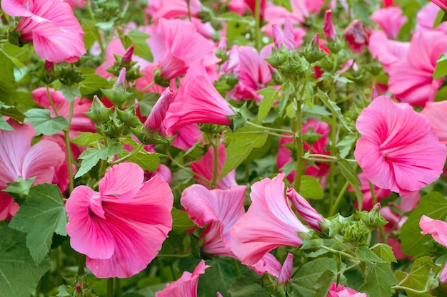 Trillende roze bloemen in een tuin