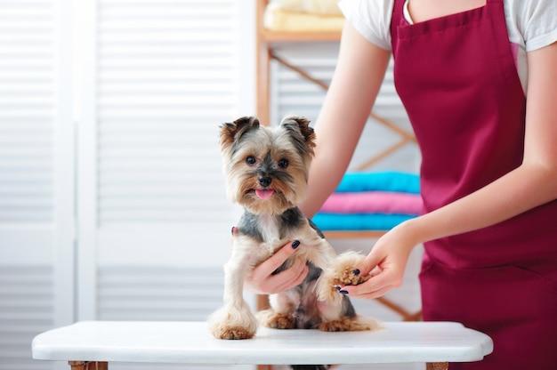 Trimmer die hondenklauwen in een trimsalon controleert