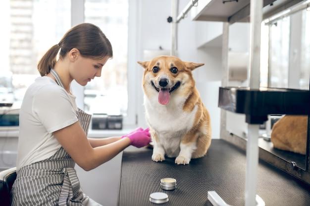 Trimmer en een hond. vrouwelijke huisdieren groomer werkt met een hond in een trimsalon