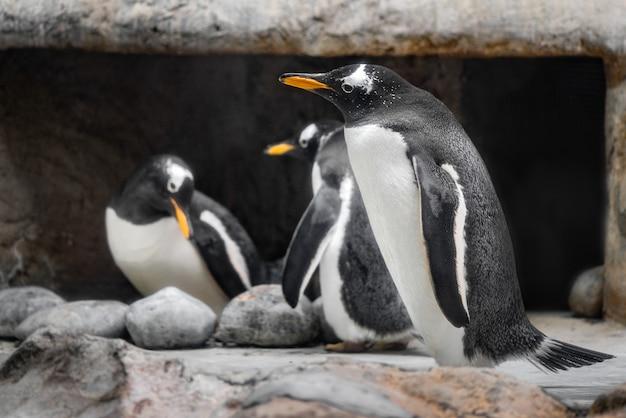 Troep van pinguïnen in dierentuin