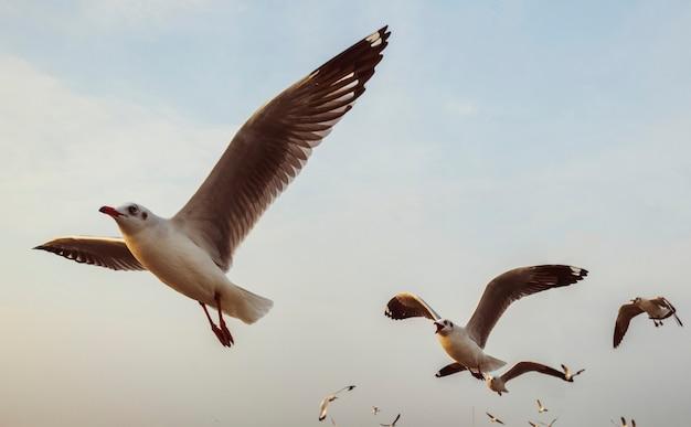 Troep van zeemeeuwen die in de hemel vliegen