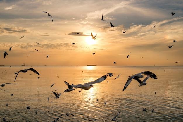 Troep van zeemeeuwen die 's avonds op zeegolf van thailand vliegen