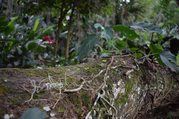 Tronco caido en el bosque