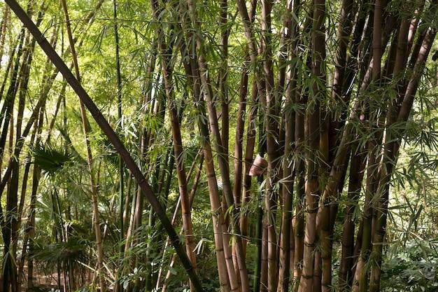 Tropisch bamboebos bij daglicht