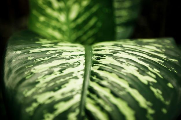 Tropisch blad met vage close-up als achtergrond