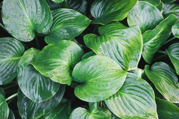 Tropisch blad met waterdruppels