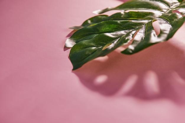 Tropisch blad monstera met schaduw op een roze achtergrond