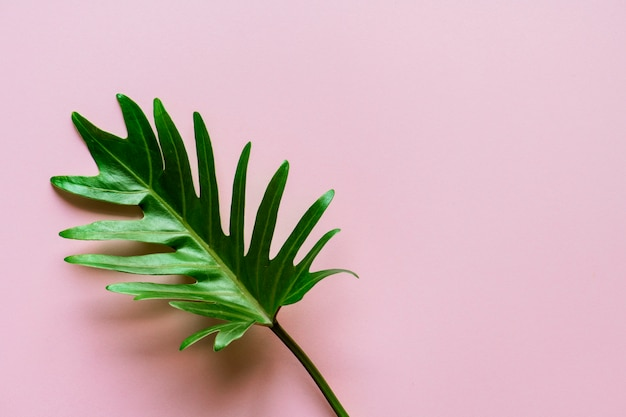 Tropisch blad op roze achtergrond