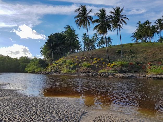 Tropisch braziliaans landschap met rivier en kokospalmen.
