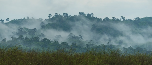 Tropisch diep regenwoud, lagen van luifelboom en berg, vrijheid en kuuroordconcept