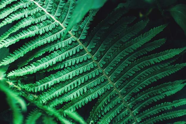 Tropisch donkergroen blad gestemde bloemenachtergrond