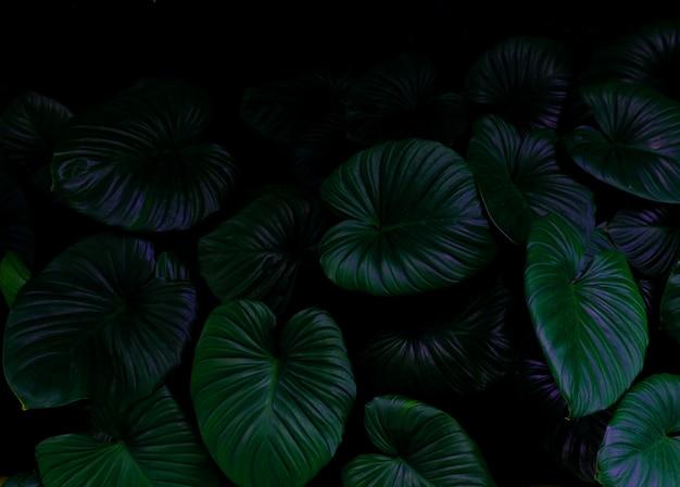 Tropisch groen gebladerteblad op donkere achtergrond in natuurlijk regenwoud.