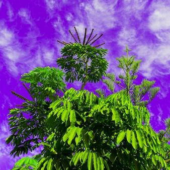 Tropisch groen op paarse lucht. kleur kunstontwerp minimaal