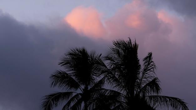 Tropisch hawaii landschap met palmbomen