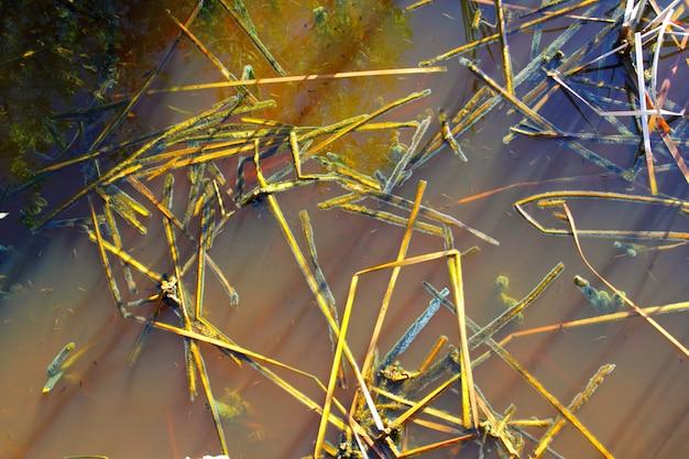 Tropisch het waterdetail van het mangrovemoeras