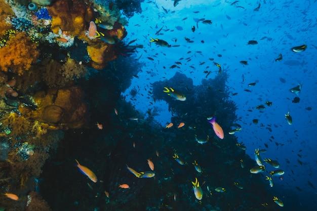 Tropisch koraalrif en vis in de zee