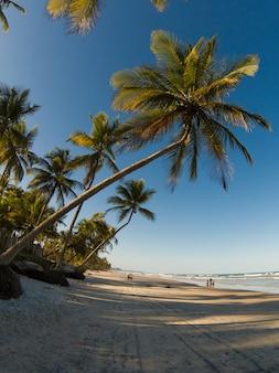 Tropisch landschap met strand met kokospalmen bij zonsondergang.