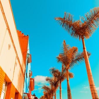 Tropisch minimaal. palmen en stedelijk. kleur ontwerp