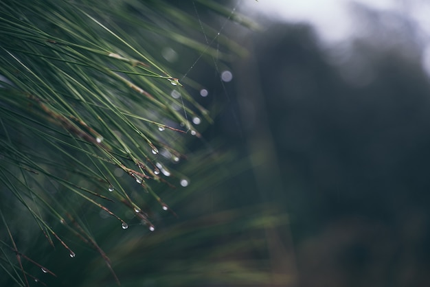 Tropisch oerwoud, gebladerte, wild, regen exotisch wildernislandschap palmvegetatie met weelderig en mist, ecologische tropen in regenwoud met licht van groei, schilderachtig groenbehang