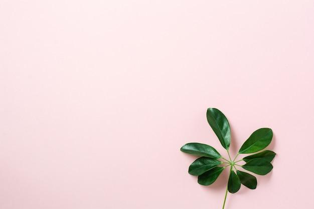 Tropisch palmblad frame op roze achtergrond met kopie ruimte. plat leggen. bovenaanzicht. zomer of lente natuur concept.