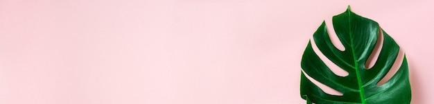 Tropisch palmblad van monstera op roze achtergrond met kopie ruimte. plat leggen. bovenaanzicht. zomer of lente natuur concept.