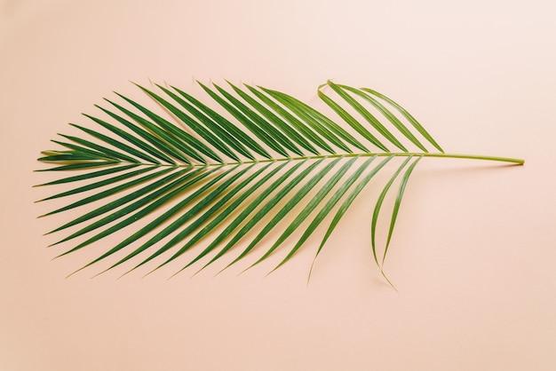 Tropisch palmblad