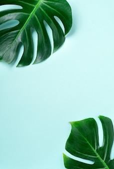 Tropisch palmbladframe op blauwe achtergrond met exemplaarruimte. plat leggen. bovenaanzicht. zomer of lente natuur concept.