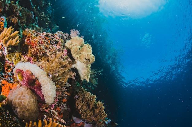 Tropisch reefscape