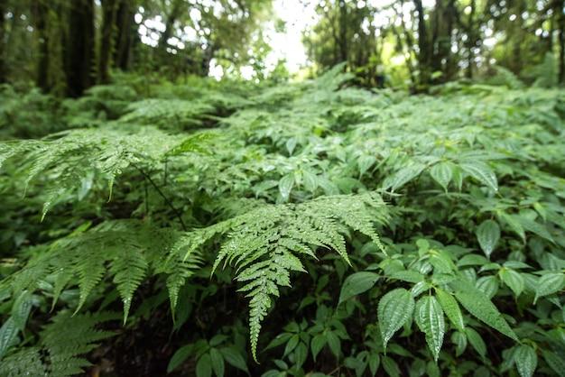 Tropisch regenwoud (angka nature trail, doi inthanon national park), chiang mai, thailand