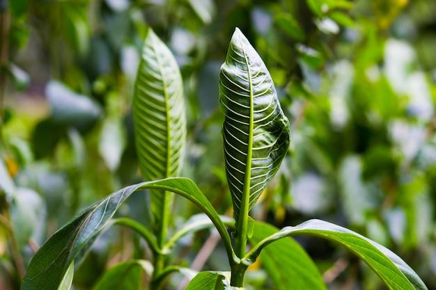 Tropisch regenwoud bladplanten struiken varens groene bladeren philodendrons en tropische planten
