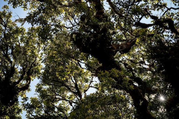 Tropisch regenwoud, groene jungle landschap