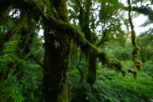 Tropisch regenwoud in doi inthanon national park, chiang mai, thailand