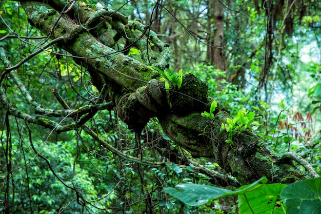 Tropisch regenwoud in thailand