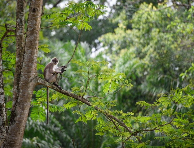 Tropisch regenwoudlandschap met aapzitting op een boom