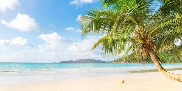 Tropisch strand en palmboom, kopie ruimte, banner