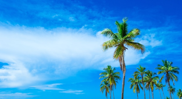 Tropisch strand in sri lanka Premium Foto
