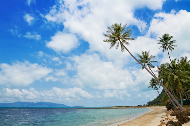 Tropisch strand met kokospalmen die uit in het overzees, koh samui, thailand uitsteekt