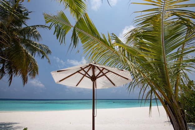 Tropisch strand met parasols en palmboom