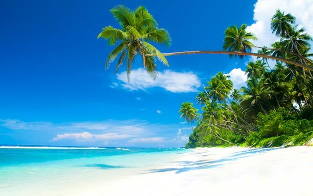 Tropisch strandparadijs in samoa