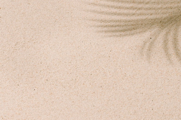 Tropisch strandzand met schaduwen van kokospalmbladeren in de zomer en vakanties concept achtergrond kopie ruimte