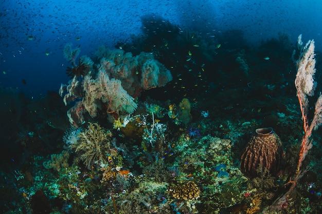 Tropisch vis en koraalrif in zonlicht