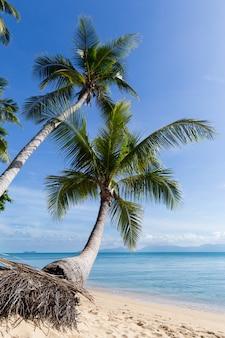 Tropisch zandstrand met kokospalmen in de ochtend. thailand, eiland samui, maenam.
