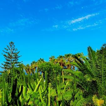 Tropische achtergrond. palmen en cactussen. canarische eilanden