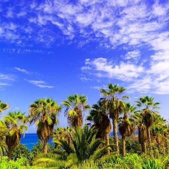 Tropische achtergrond. palmen en oceaan canarische eilanden