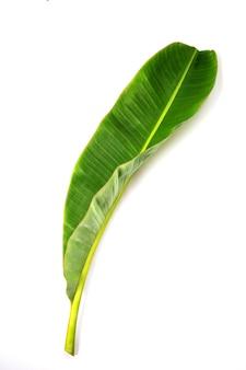 Tropische bananenblad textuur. geïsoleerd op wit