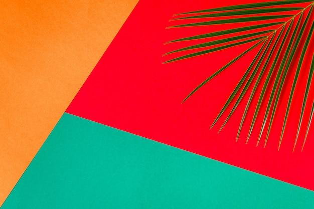 Tropische blad op pastel achtergrond